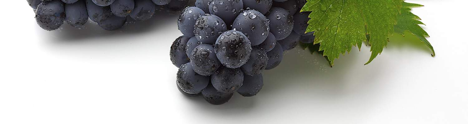 wine production grapes bottom banner 400px