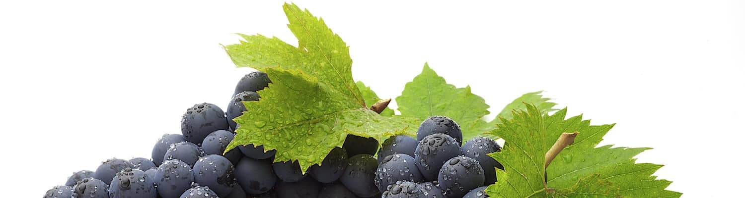 wine production grapes top banner 400px