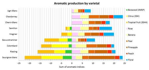 Fig 4 Aroma production by varietal