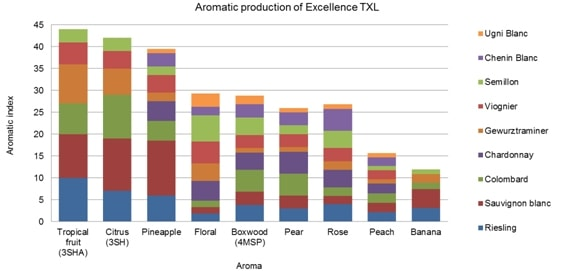 Fig 5 Aromatic production of Excellence TXL