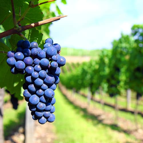 oenological services winemaking products for wineries in australia